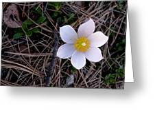 Wildflower Among Pine Needles Greeting Card