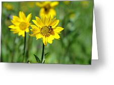 Wildflower Bee Greeting Card