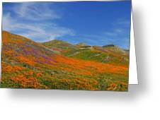 Wildflower Extravaganza  Greeting Card