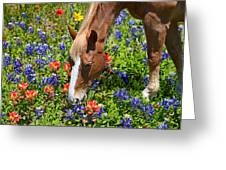 Wildflower Feast Greeting Card