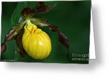 Wildflower Lady Slipper Greeting Card