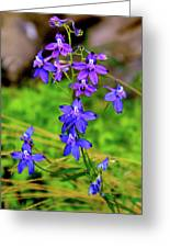 Wildflower Larkspur Greeting Card