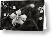 Wildflower Greeting Card