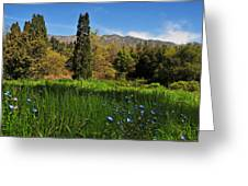 Wildflower Meadow At Descanso Gardens Greeting Card by Lynn Bauer