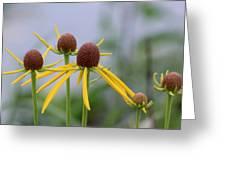 Wildflower Spinners Greeting Card