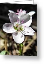 Wildflower Sun Worship Greeting Card