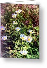 Wildflower Wandering Greeting Card