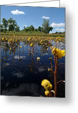 Wildflower Waterscape Greeting Card