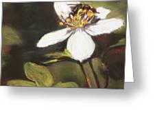 Wildflower Wildlife Greeting Card