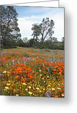 Wildflower Wonderland 2 Greeting Card