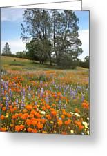 Wildflower Wonderland 3 Greeting Card