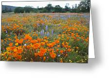 Wildflower Wonderland Greeting Card