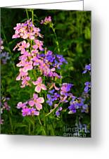 Wildflower Woods Greeting Card