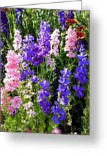 Wildflowers #15 Greeting Card