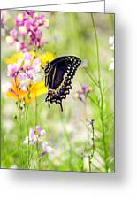 Wildflowers And Butterfly Greeting Card