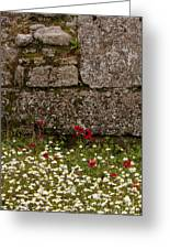 Wildflowers And Olympia Ruins   #9508 Greeting Card