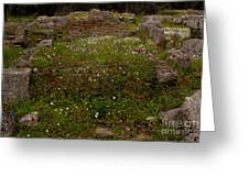 Wildflowers And Olympia Ruins   #9594 Greeting Card