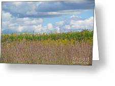 Wildflowers And Ornamental Grass Greeting Card