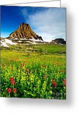 Wildflowers At Logan Pass Greeting Card