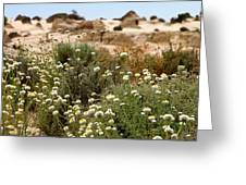 Wildflowers At Mungo National Park Greeting Card