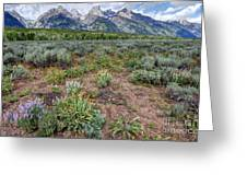 Wildflowers Bloom Below Teton Mountain  Range Greeting Card