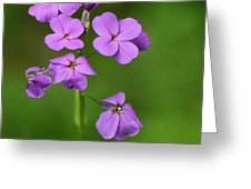 Wildflowers Greeting Card