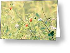Wildflowers In Bloom Greeting Card