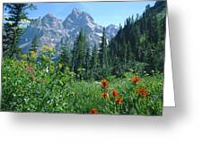 1m9371-h-wildflowers In Cascade Canyon, Tetons Greeting Card