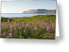 Wildflowers In Gaspe Greeting Card
