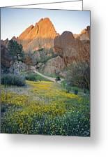 1b6430 Wildflowers In Pinnacles National Park Greeting Card