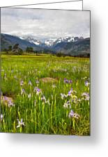 Wildflowers In Rocky Mountain National Park Greeting Card