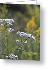 Wildflowers In September 2012 Greeting Card