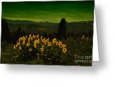 Wildflowers In The Beartooth Mountains Greeting Card