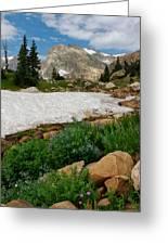 Wildflowers In The Indian Peaks Wilderness Greeting Card