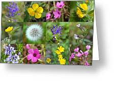 Wildflowers Mosaic Greeting Card
