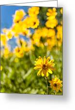 Wildflowers Standing Out Abstract Greeting Card