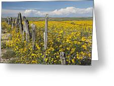 Wildflowers Surround Rustic Barb Wire Greeting Card