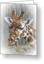 Wildlife Giraffe  Greeting Card