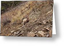 Wildlife Of Montana Greeting Card by Yvette Pichette