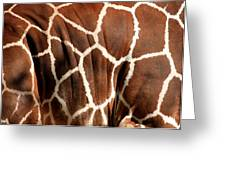 Wildlife Patterns  Greeting Card