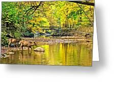 Wildlifes Thirst Greeting Card