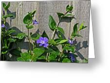 Wildly Purple Greeting Card