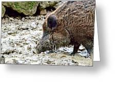 Wildschwein Greeting Card