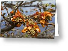 Wiliwili Flowers - Erythrina Sandwicensis - Kahikinui Maui Hawaii Greeting Card