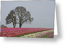 Willamette Valley Tulips Greeting Card