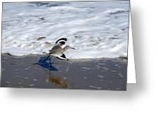 Willet 001 Greeting Card