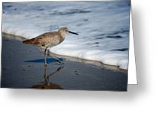 Willet 002 Greeting Card