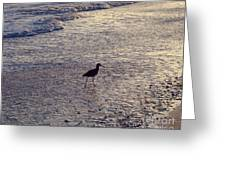 Willet In The Waves Greeting Card