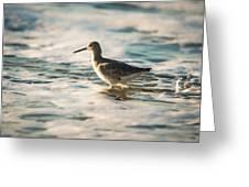 Willet Wading Through The Ocean Foam Greeting Card