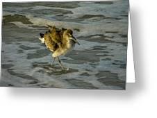 Willet Washing 1 Greeting Card